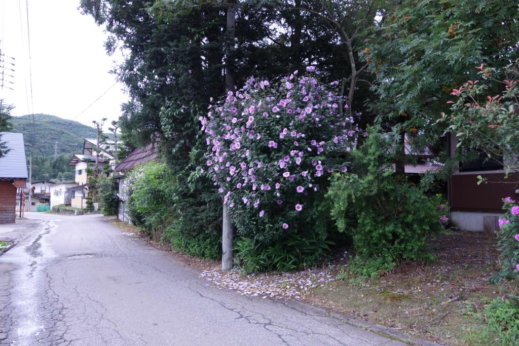 f:id:toshikida:20160621162221j:plain
