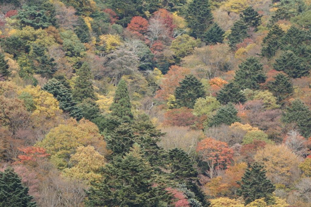 f:id:toshikida:20161113165700j:plain