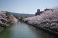京都新聞写真コンテスト 岡崎疎水