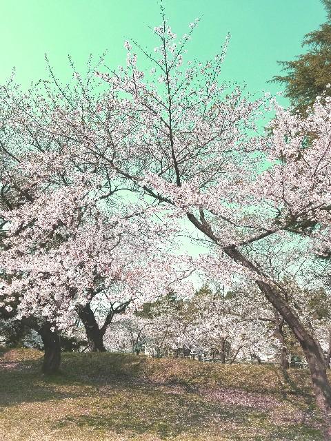 f:id:toshiya4952:20180505182133j:image