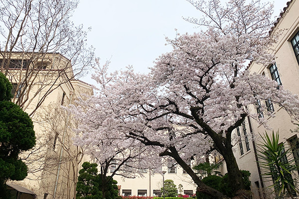 f:id:toshobu:20200403143349j:image