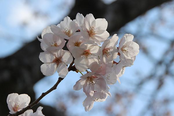 f:id:toshobu:20200405220807j:image