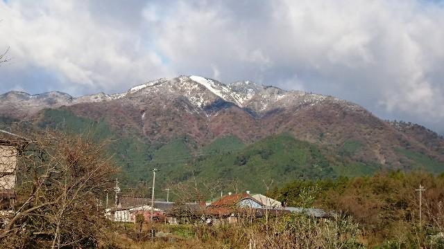 f:id:tosshii-plants:20171121201143j:image