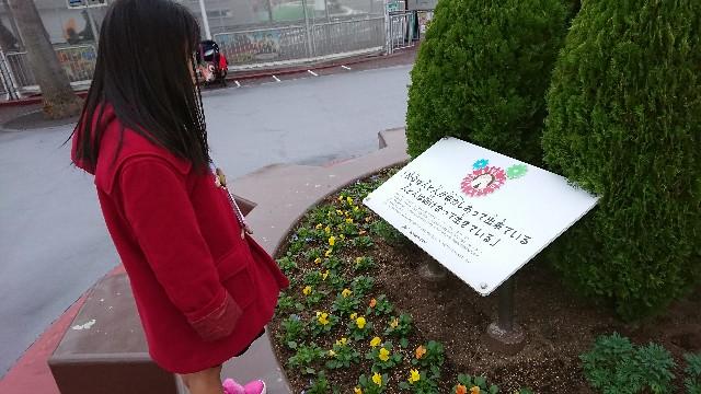 f:id:tosshii-plants:20171126211030j:image