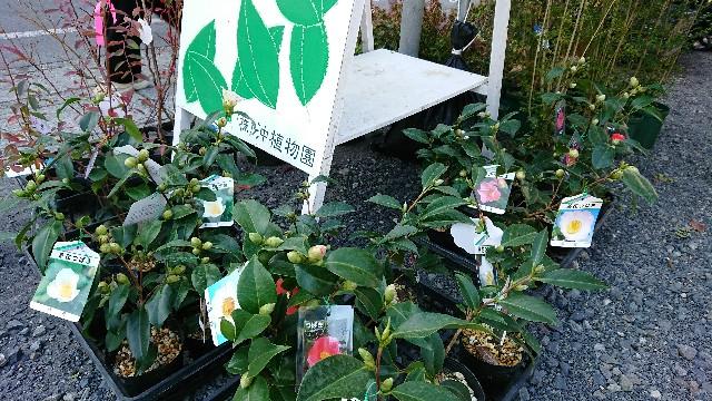 f:id:tosshii-plants:20171203185254j:image