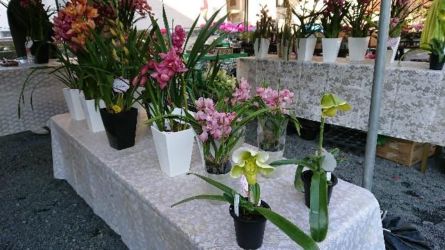f:id:tosshii-plants:20171203185329j:image