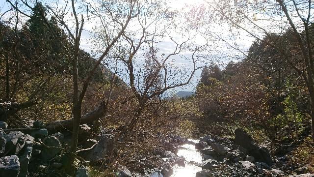 f:id:tosshii-plants:20171210172210j:image