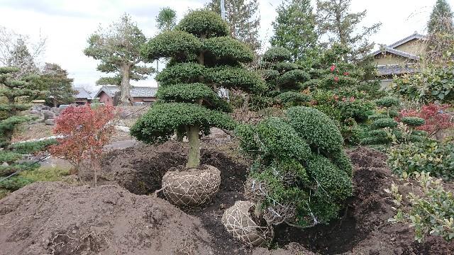 f:id:tosshii-plants:20171212214404j:image
