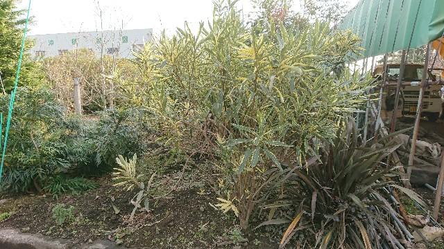 f:id:tosshii-plants:20171216092001j:image
