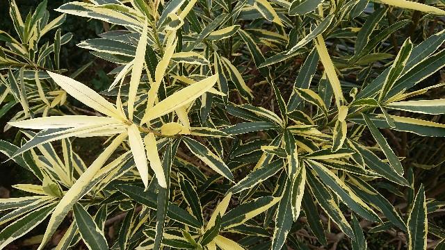 f:id:tosshii-plants:20171216092030j:image