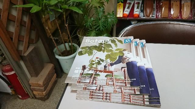 f:id:tosshii-plants:20171221204609j:image