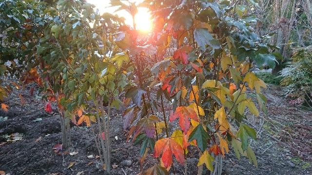 f:id:tosshii-plants:20171222221253j:image