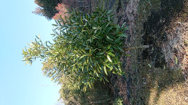 f:id:tosshii-plants:20180110213840j:image
