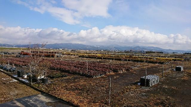 f:id:tosshii-plants:20180207193551j:image