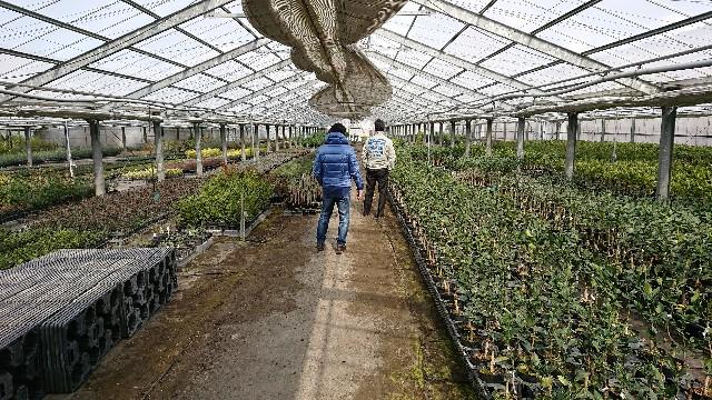 f:id:tosshii-plants:20180207193610j:image