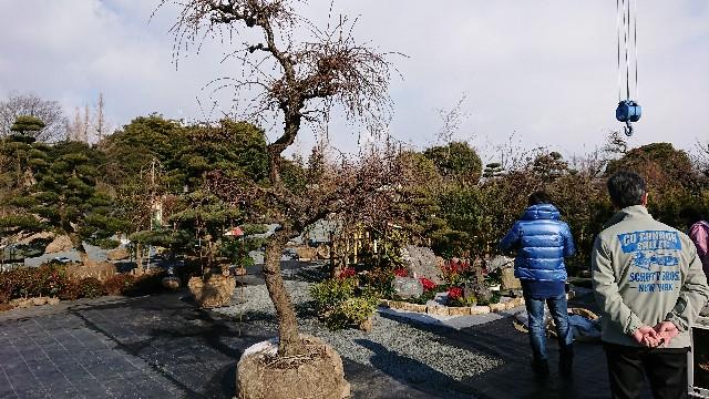f:id:tosshii-plants:20180207194007j:image