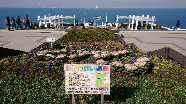 f:id:tosshii-plants:20180209185954j:image