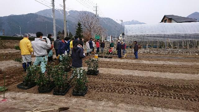 f:id:tosshii-plants:20180225225844j:image