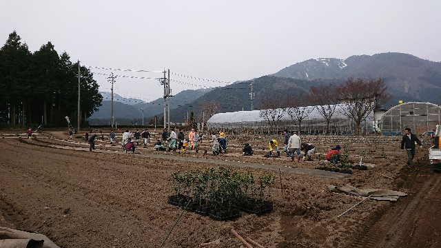 f:id:tosshii-plants:20180225225944j:image