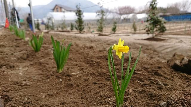 f:id:tosshii-plants:20180225230311j:image