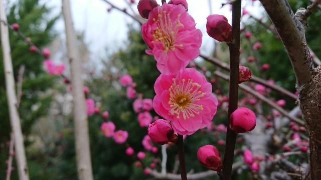 f:id:tosshii-plants:20180301195942j:image