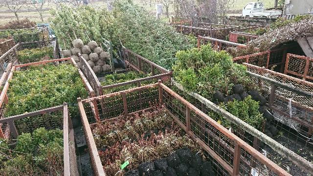 f:id:tosshii-plants:20180311150344j:image