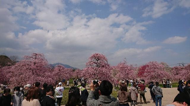 f:id:tosshii-plants:20180318211936j:image