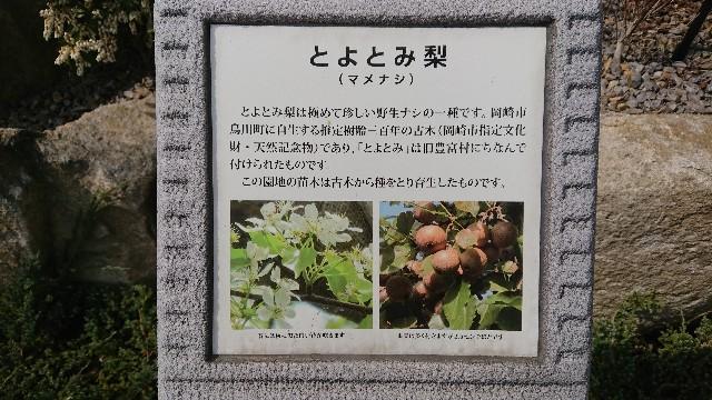 f:id:tosshii-plants:20180331225450j:image