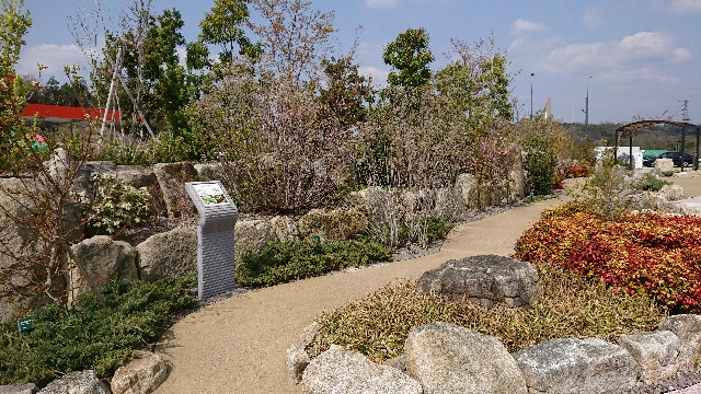 f:id:tosshii-plants:20180331225511j:image