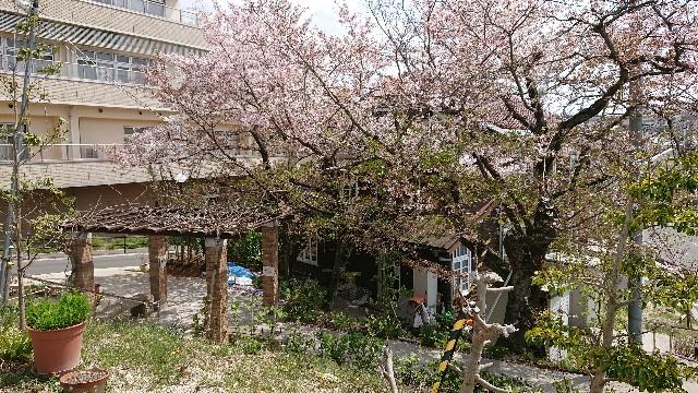 f:id:tosshii-plants:20180403234113j:image