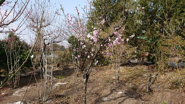 f:id:tosshii-plants:20180405192043j:image