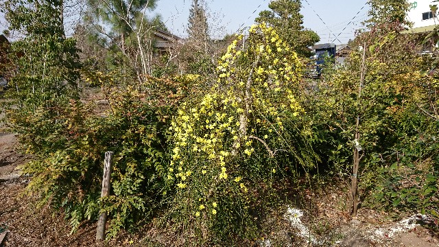 f:id:tosshii-plants:20180407214907j:image