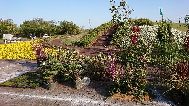 f:id:tosshii-plants:20180413212919j:image