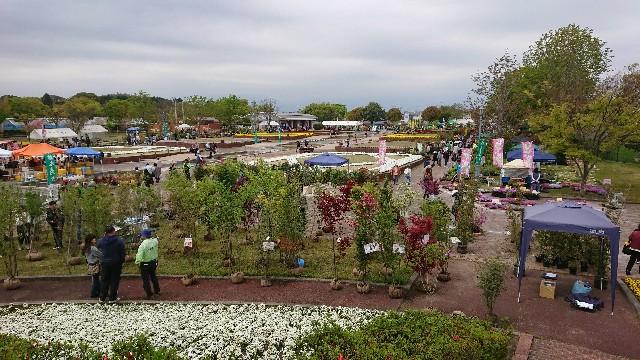 f:id:tosshii-plants:20180414215350j:image