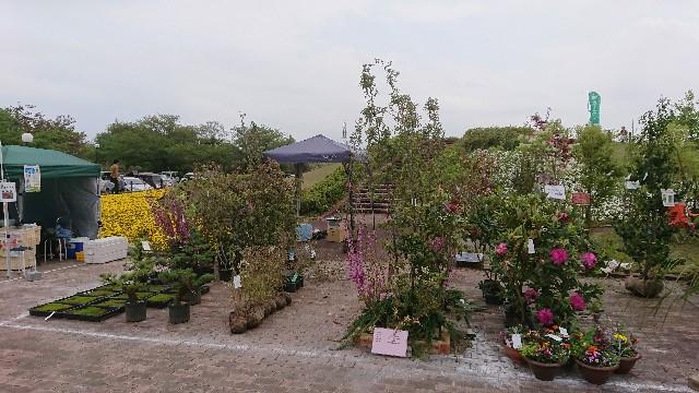 f:id:tosshii-plants:20180414215519j:image