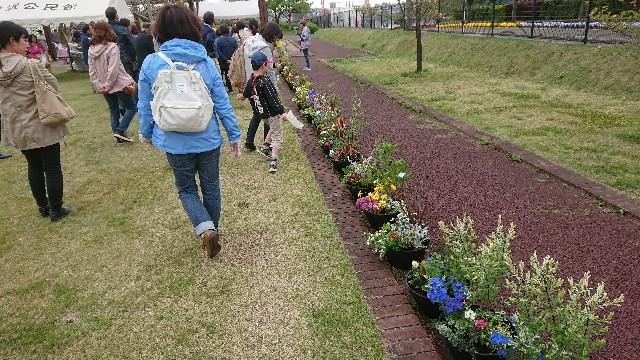 f:id:tosshii-plants:20180414215646j:image