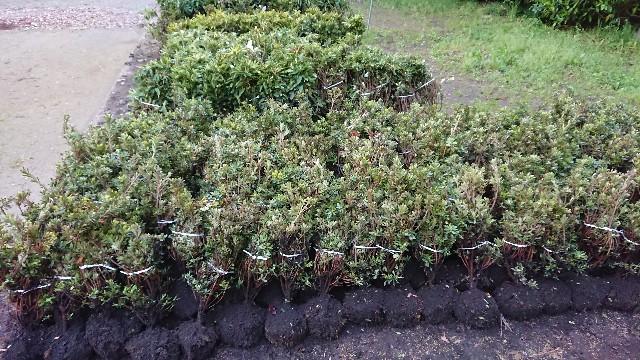 f:id:tosshii-plants:20180415225653j:image