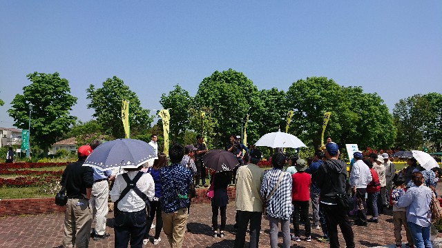 f:id:tosshii-plants:20180421215508j:image