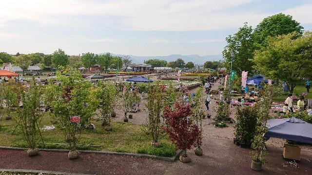 f:id:tosshii-plants:20180423115113j:image