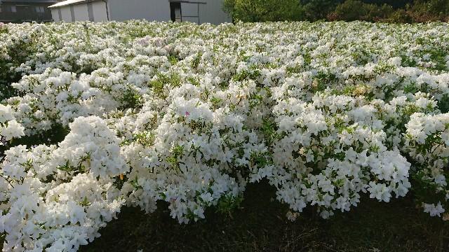 f:id:tosshii-plants:20180502202532j:image