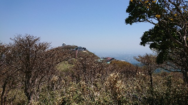 f:id:tosshii-plants:20180505235015j:image