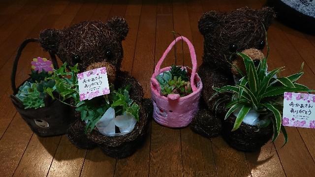 f:id:tosshii-plants:20180513230525j:image