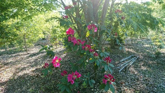 f:id:tosshii-plants:20180516123912j:image