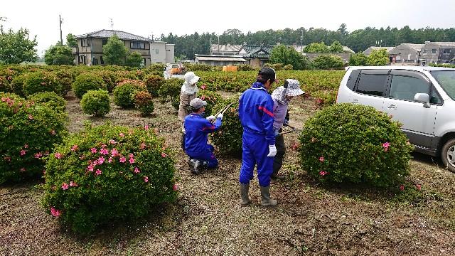 f:id:tosshii-plants:20180516174544j:image