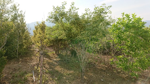 f:id:tosshii-plants:20180522212442j:image