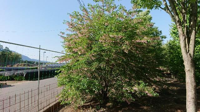 f:id:tosshii-plants:20180524224329j:image