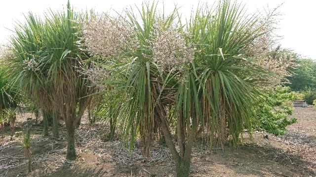 f:id:tosshii-plants:20180529234008j:image