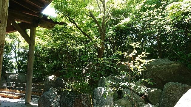 f:id:tosshii-plants:20180604225845j:image