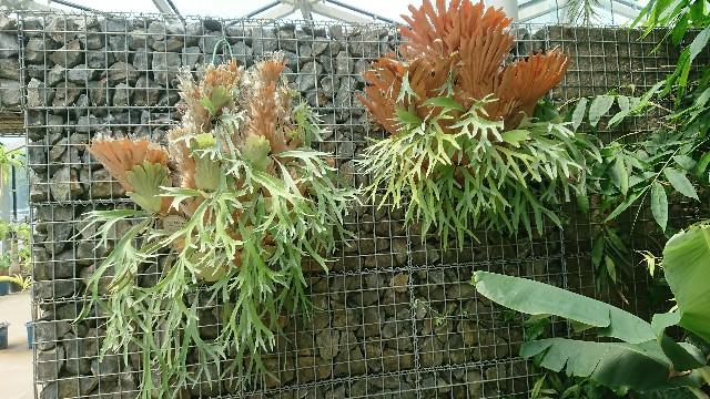 f:id:tosshii-plants:20180704185455j:image