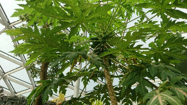 f:id:tosshii-plants:20180707101129j:image